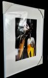 Krombacher Bier, Werbeposter in Kunststoffrahmen Judisch zapft